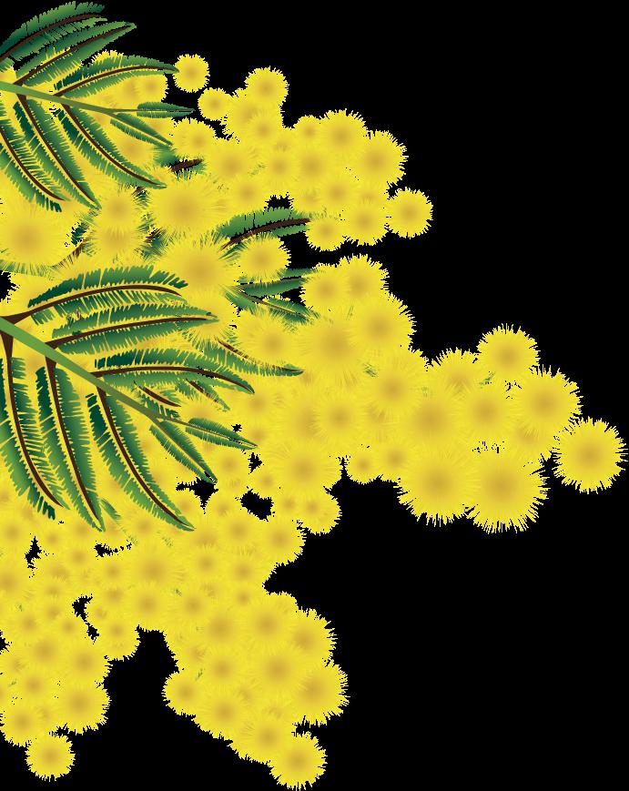 praznik mimoze herceg novi